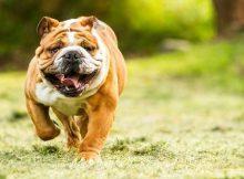 Gambar anjing yang ramah