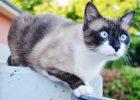 Gambar kucing kentut