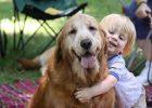 Senyuman anjing