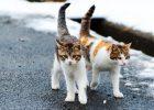 Berapa jumlah kucing di dunia