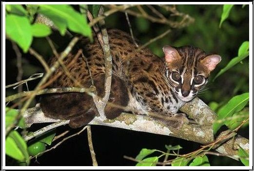 Gambar Kucing Liar Kucing Kuwuk