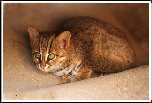 Gambar Kucing Liar Kucing Totol