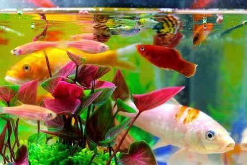Ikan di Akuarium
