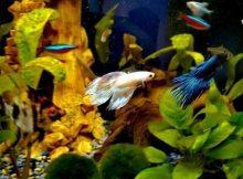 Ikan mengejar ikan