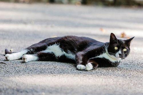 Kucing tiduran di jalan raya