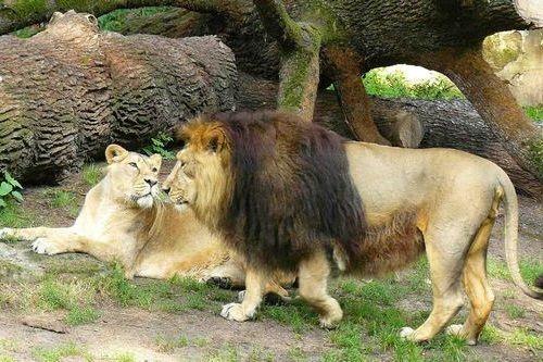 Singa Asia