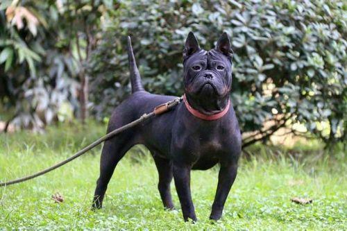 Anjing China Chongqing