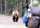 Apa saja aktivitas beruang