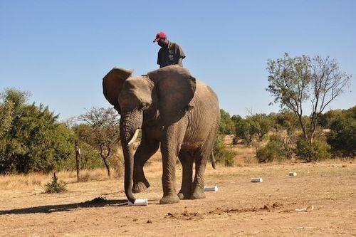 Gambar Gajah