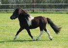 Gambar Kuda Poni
