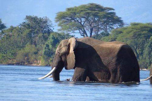 Gambar gajah di air