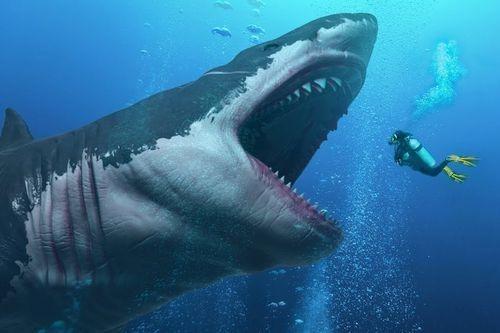 Gambar hiu Megalodon Shark