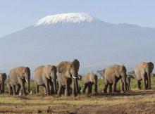 Gambar kawanan gajah Afrika