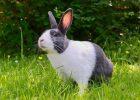 Gambar kelinci lucu