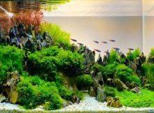 Tanaman air aquascape