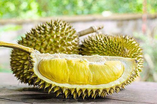 Anjing makan durian