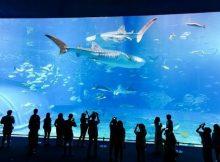 Akuarium ikan besar