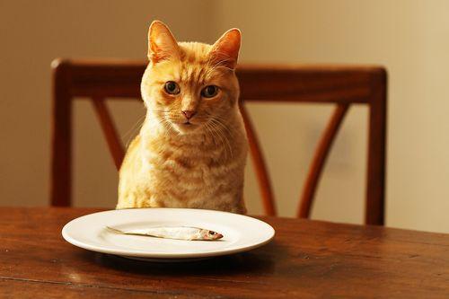Protein Kucing