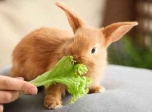 Kelinci makan
